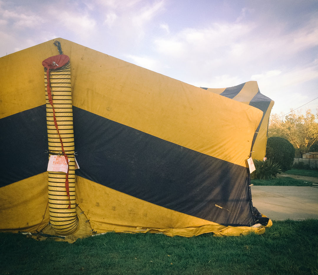 Termite Tenting Cost & Time