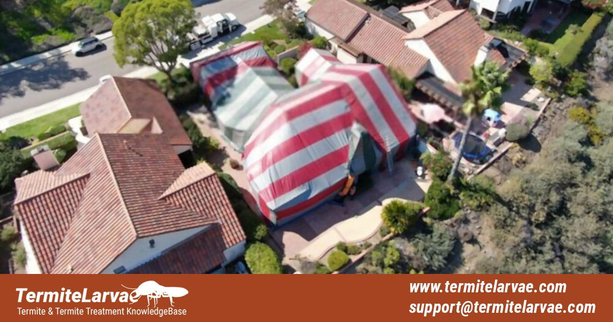 Termite Tenting Service And Cost.