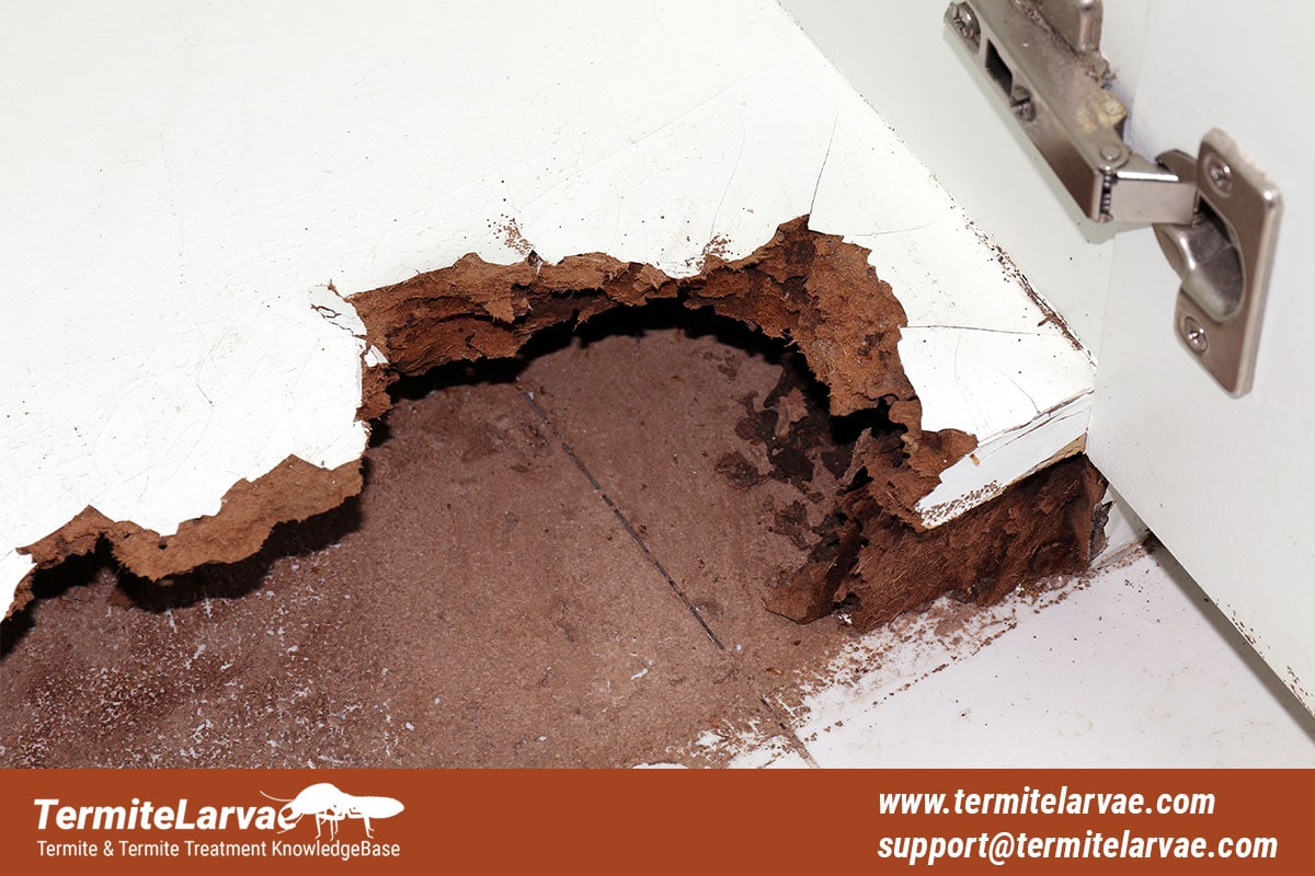 What Is A Termite Bond and Its Cost