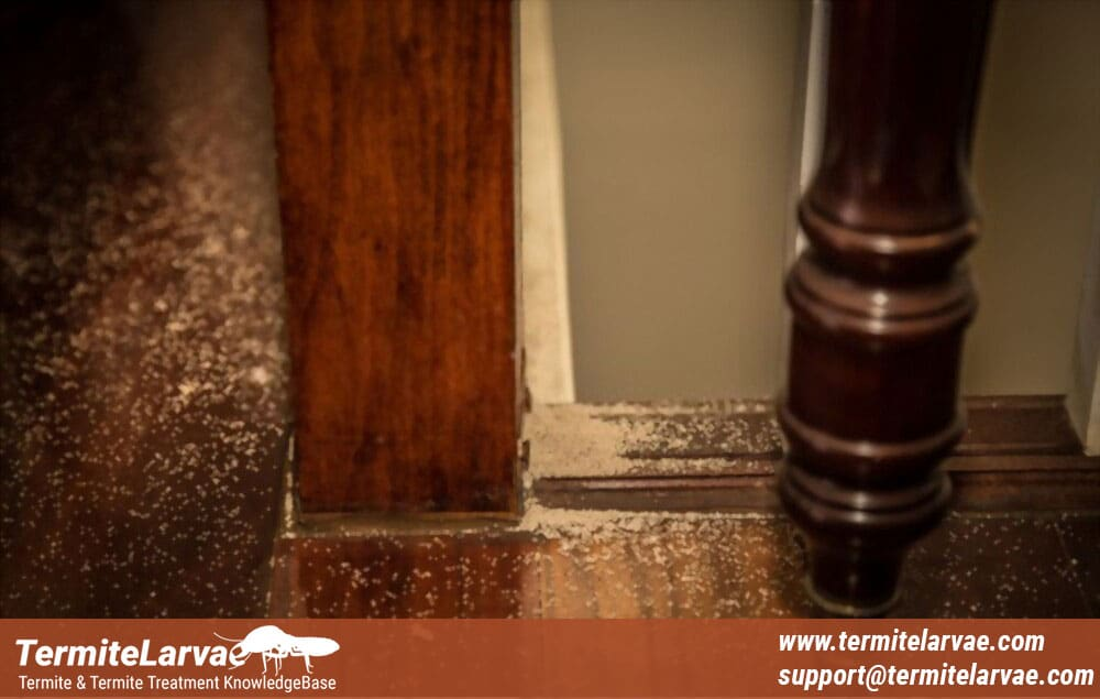 Where Can You Find Termite Poop?