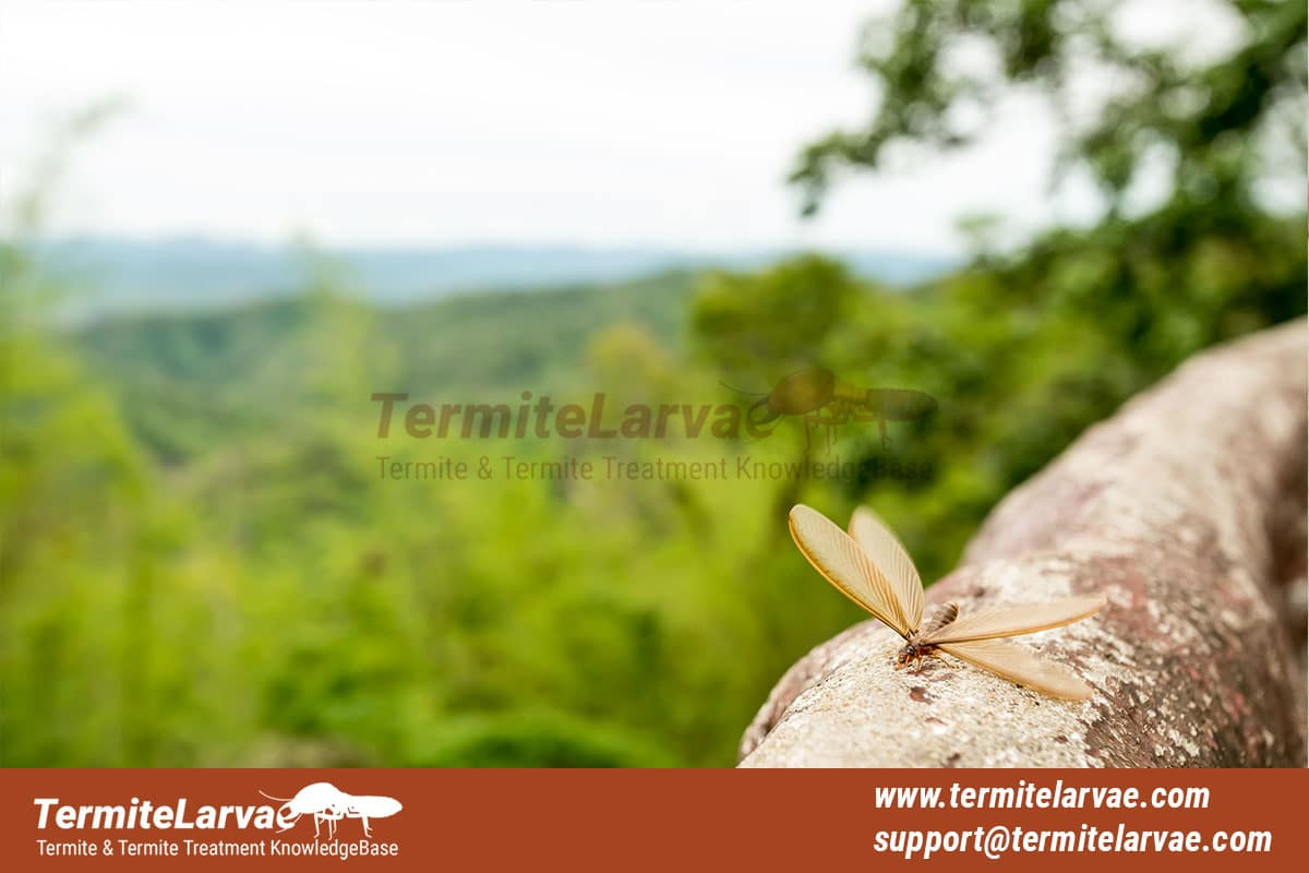 Termites with Wings -15 Hidden Facts About Termites