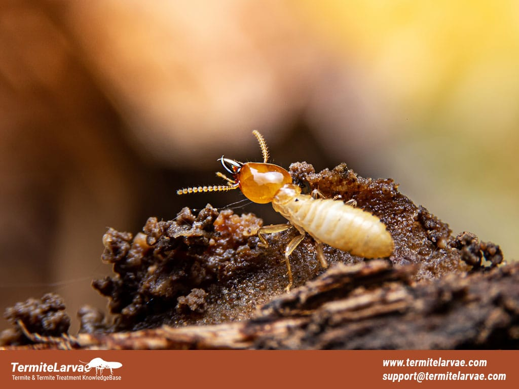 What Color Are Termites?