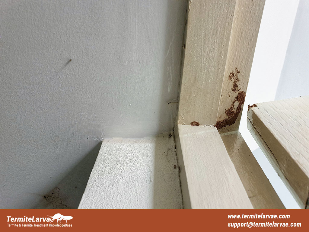 How to Look For Termite Damage