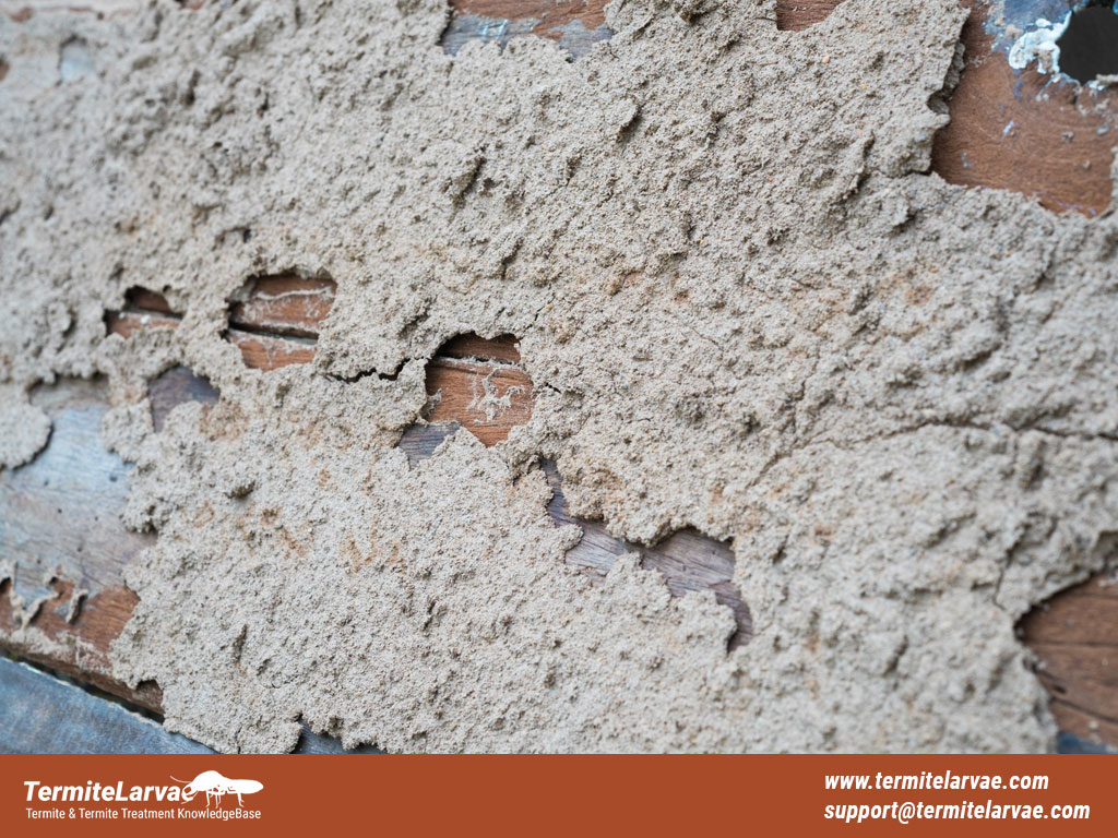 How to Treat Termite Mud Tubes